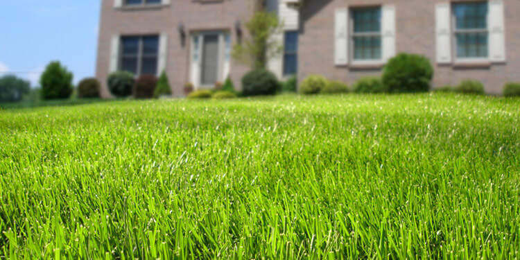 The Grass is Greener with Scotts Lawn Care Products – SQM Pick